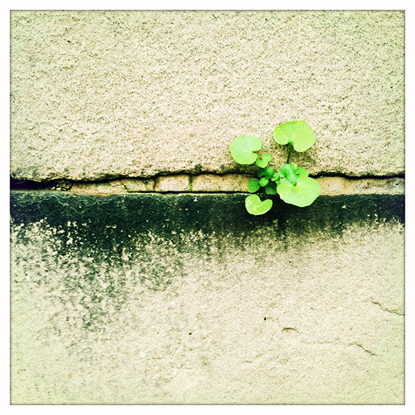 Photograph: Grow Where You're Planted