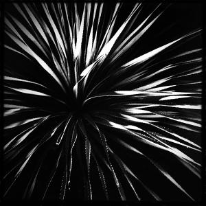 Photograph: Yucca Fireworks I